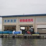 江の島漁協です