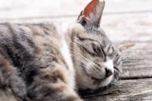 ペット 猫 死んだら