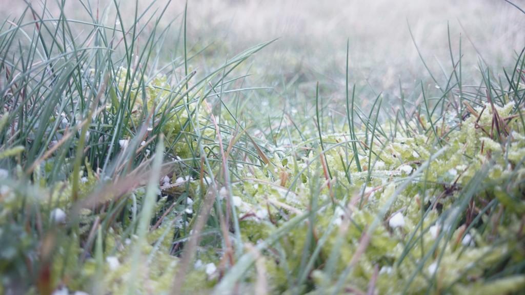 Frost på heden i Haderslev