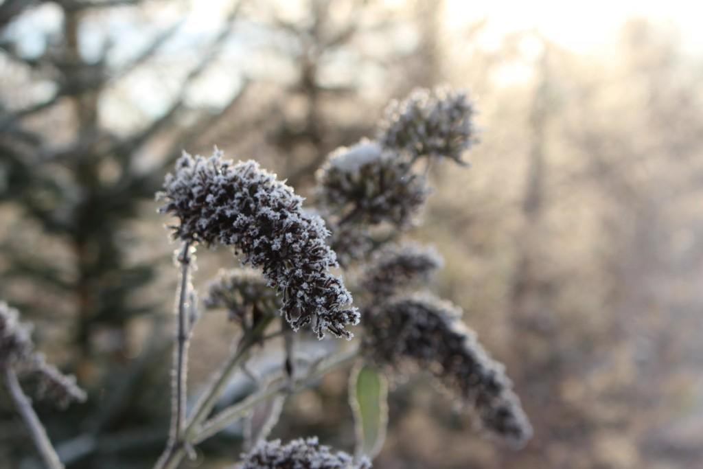 Vinterbillede Danmark