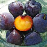Abricots prunes, (plumcot)