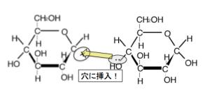 グルコース 正電荷 グリコシド結合