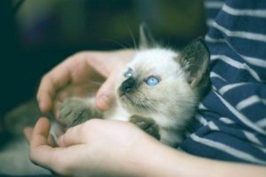 kitten-882058_960_720