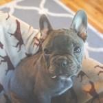 中型犬の人気種類10選|写真一覧・体重・大きさについて