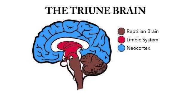 Triune+Brain-01_0