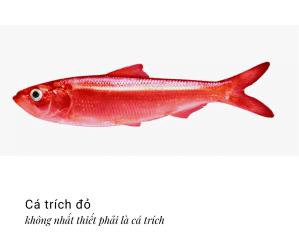 Cá trích đỏ trong toán học