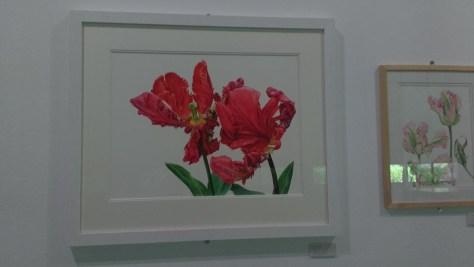 El jardín botánico y los tulipanes