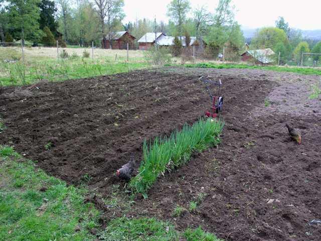 Potatisland och piplök
