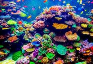 soñar con coral