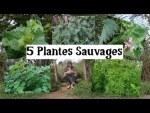 5 Sauvages n°2
