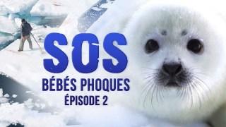 SOS bébés phoques – Episode 2