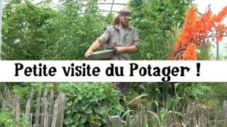 Potager et Mildiou de la tomate