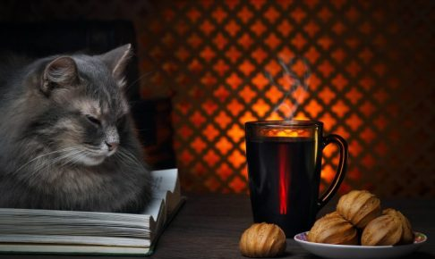 The cat lies on a book and a pretty smile. Next cup of hot coffee or tea and a saucer with biscuits. In the background a fire. Twilight, evening, cozy atmosphere