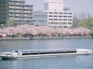 大阪城公園 花見 観桜ナイター 桜 観光