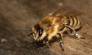 蜂,対処法,症状,刺される,種類