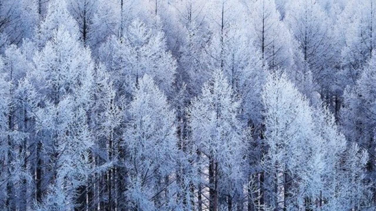 少納言よ、香炉峰の雪いかならむ 品詞分解 枕草子『雪のいと高う降りたるを』解説・品詞分解