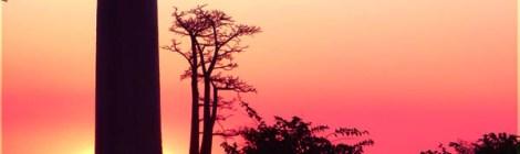 Baobab Allee i Morondava