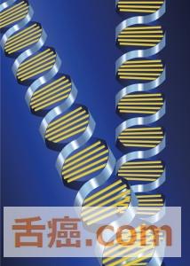 ヒドロキシラジカルに弱いDNA