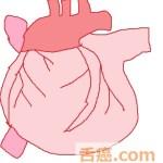 心臓は癌にならない