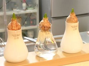 玉ねぎの芽