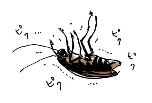 死にそうなゴキブリ