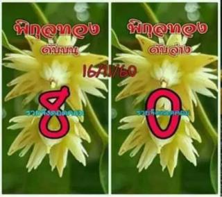 เลขดับพิกุลทอง 16/11/60, เลขดับพิกุลทอง 16-11-60, เลขดับพิกุลทอง 16 พ.ย. 60, เลขดับ, เลขดับพิกุลทอง