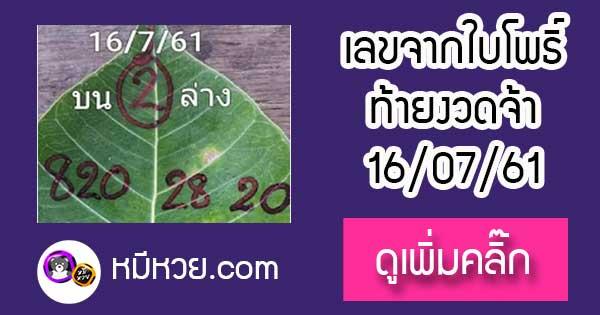 เลขใบโพธิ์16/7/61