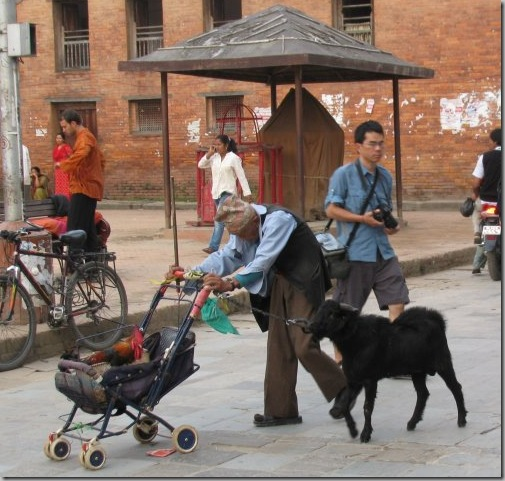 rooster_on_stroller_goat_follows_old_man