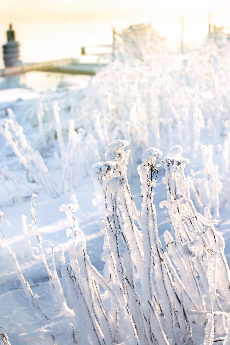 frosty2 (1 of 1)