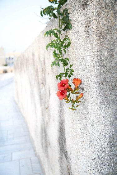 flower-oia-1-of-1