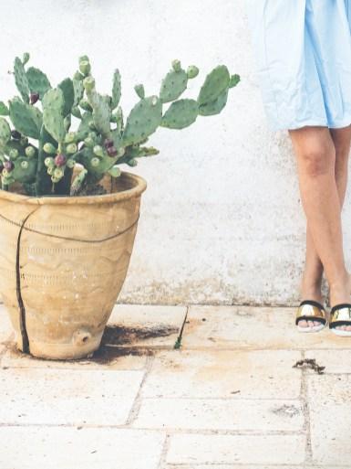 cactus6 (1 of 1)