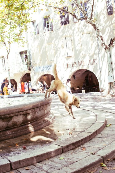 uzes fountain pup1 (1 of 1)