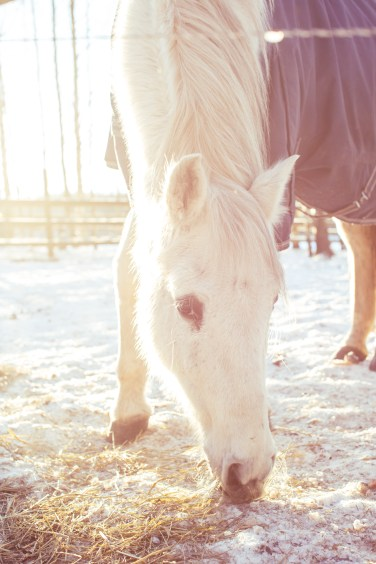 countryside horse (1 of 1)