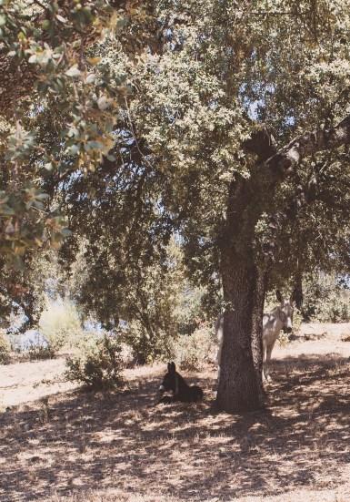 villharta masseria6 (1 of 1)