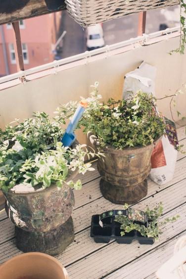 balcony flowers1