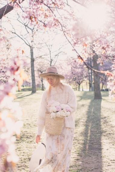 cherry blossom17