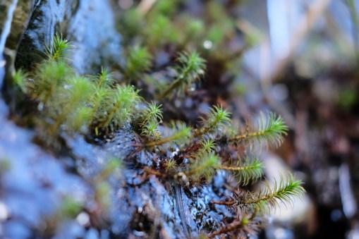 Eis und Grün (unterhalb der Hornisgrinde)