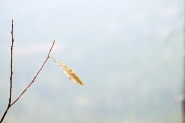 """""""Leaf Ping""""... wenn ich einen Namen geben müsste (am Wilden See)"""