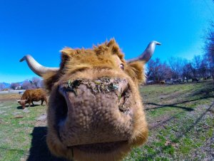 GoPro Ox close up