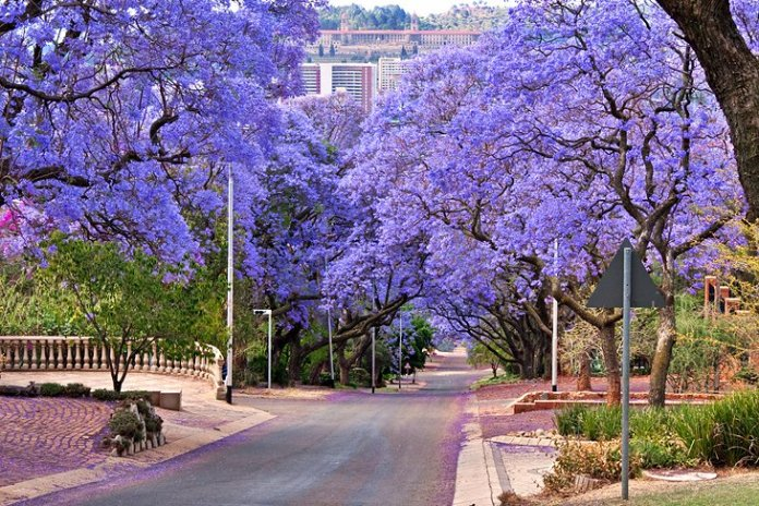 south Best Places To Visit In Johannesburg South Africa