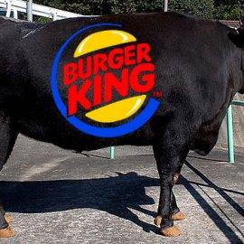 UK Burger King serves Kobe Beef burger