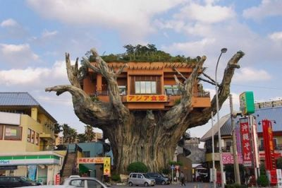 Okinawa tree house restaurant