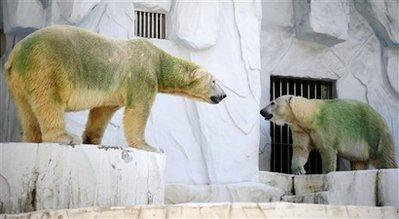 Green polar bears in Japan