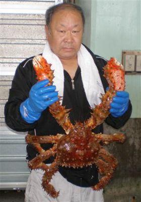 Huge crab caught in Hokkaido
