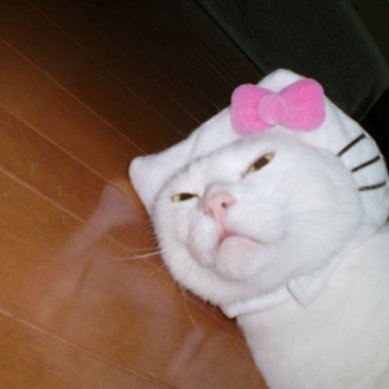 A real Hello Kitty