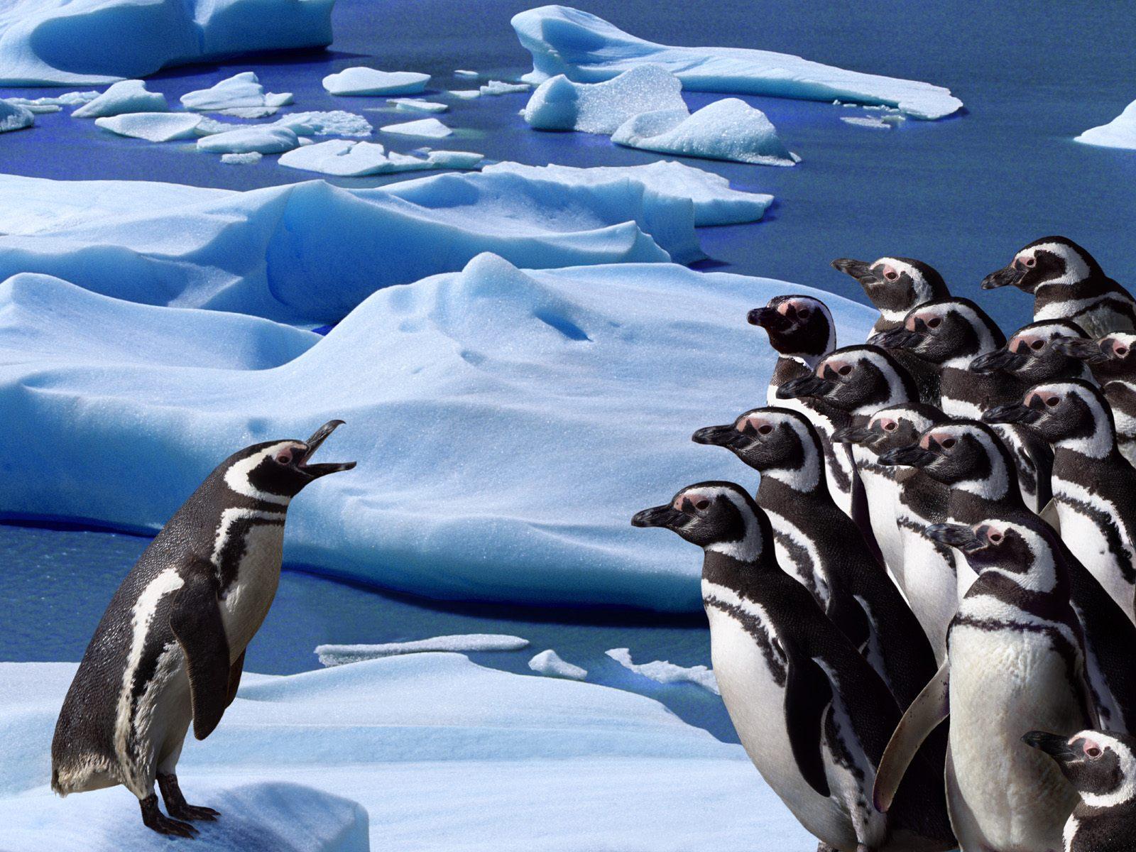 Immagine a colori di pinguini