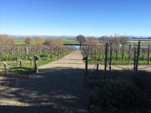 xoxojackie winery