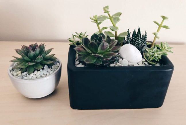 How to Create Your Own Mini Succulent Garden plants diy