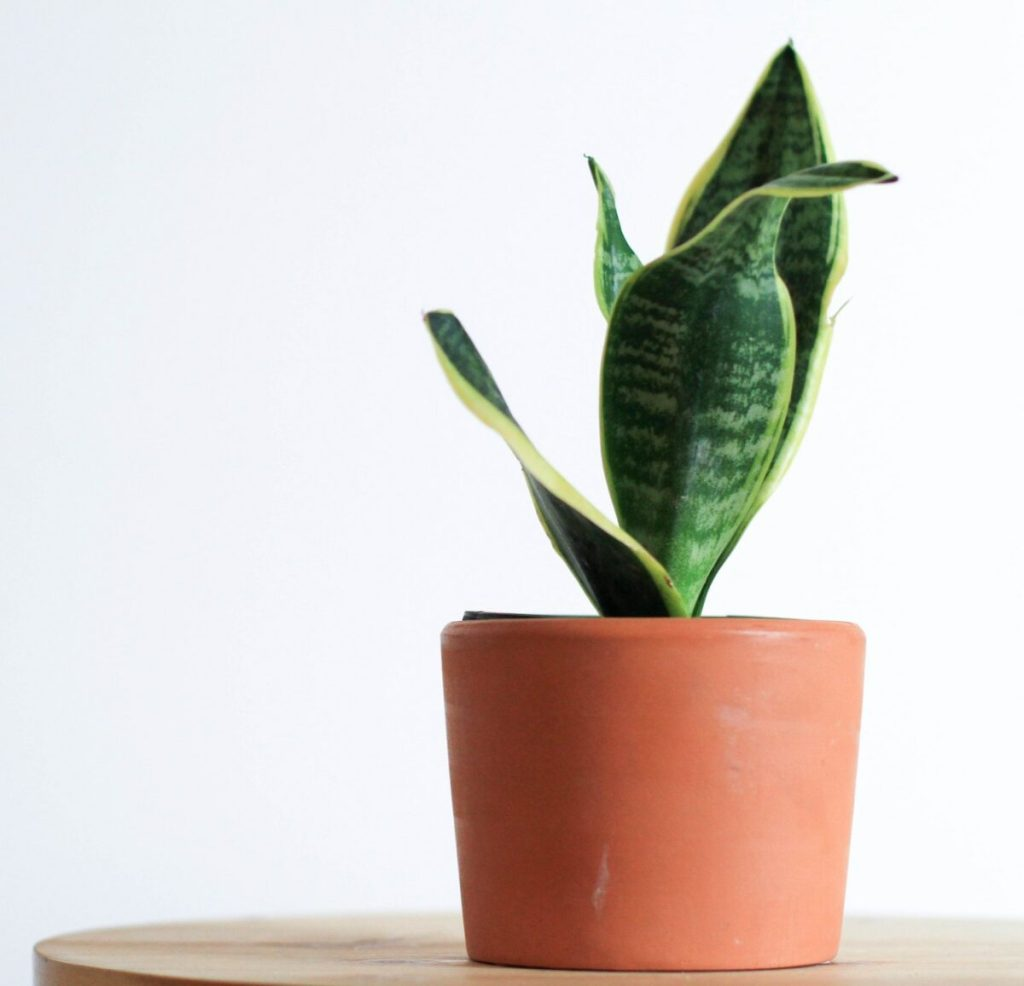 Picking plants for an office desk plants life-style