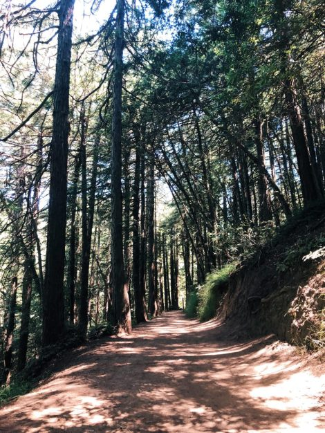 An Urban Oasis: The Sequoia Bayview Trail travel